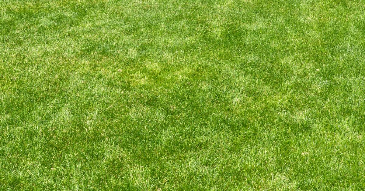 Rapid grass growth in spring brings out mowers