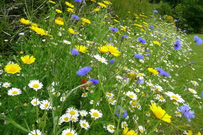Are you sure your meadow is a meadow? | The Wildflower Garden