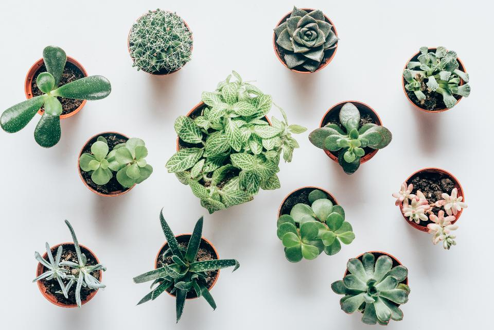 New Research Busts Myth That Indoor Plants Improve Air Quality