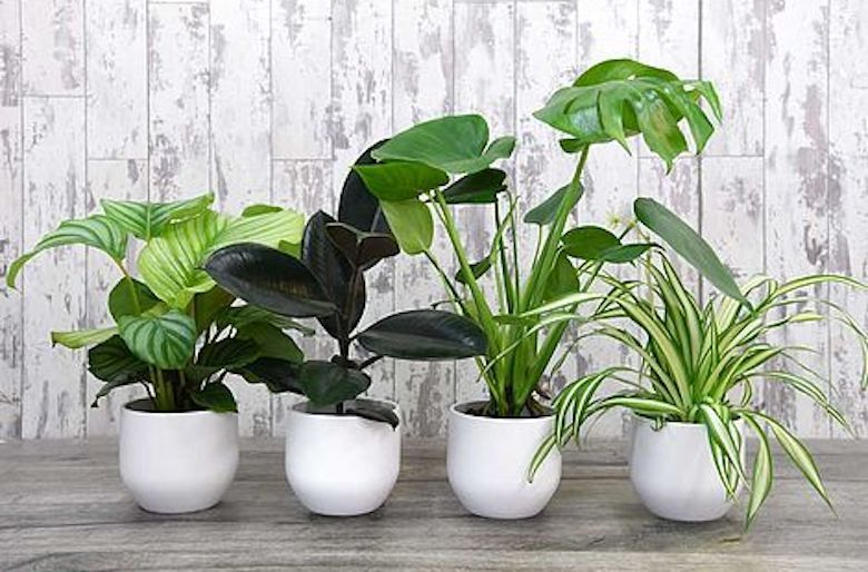 Inspiring indoor gardening blogs   Blog at Thompson & Morgan