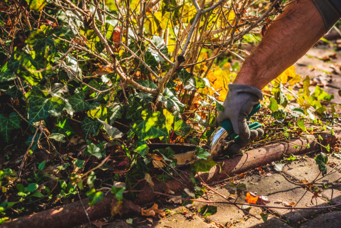 Winter Is Coming: How to Prepare Your Garden the Green Way - FineGardening