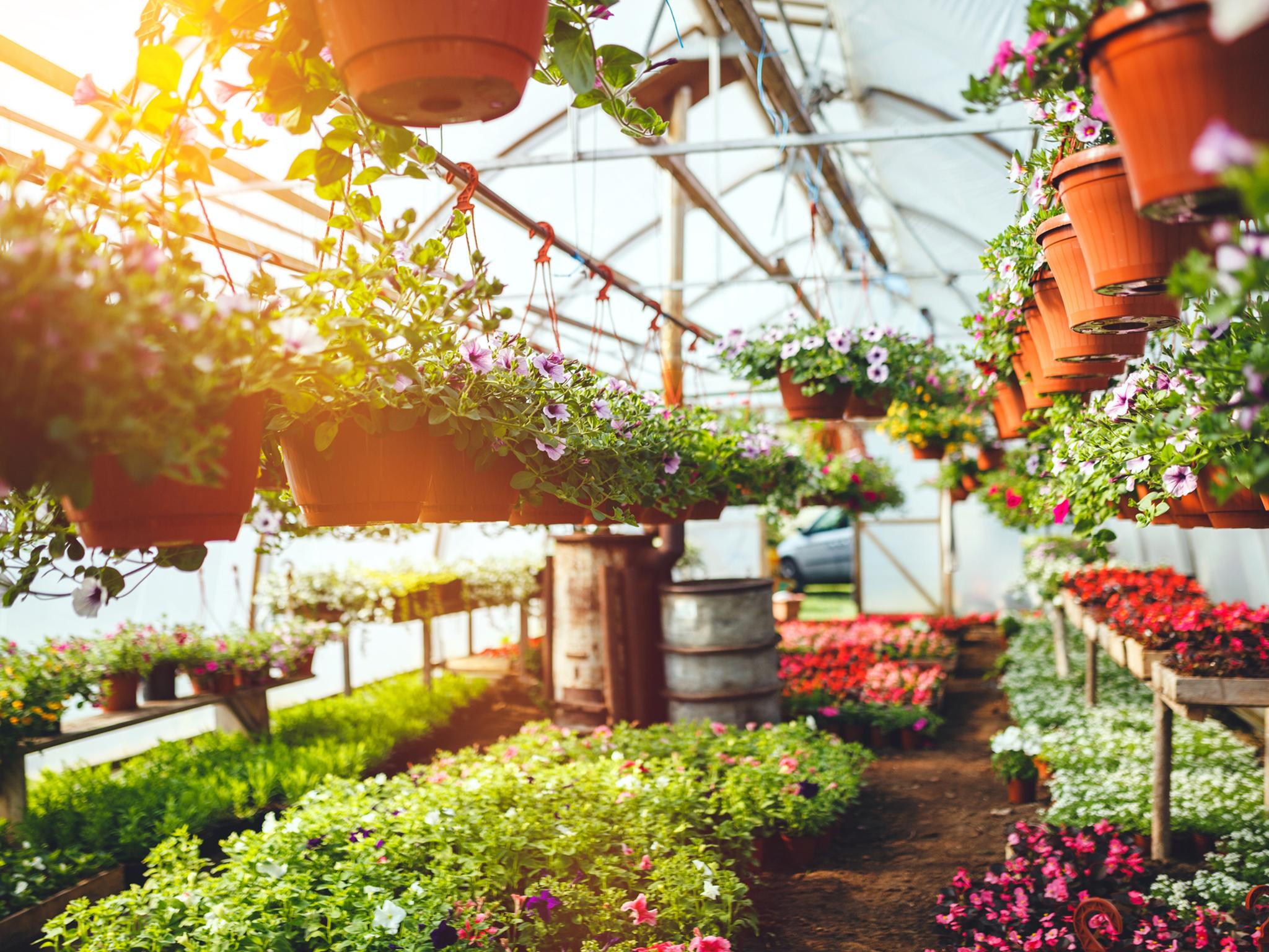 Everything you need to know about garden centres reopening