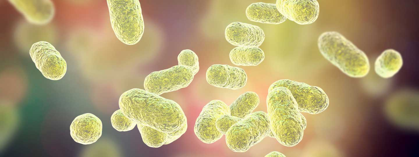 Does gut bacteria play a role in rheumatoid arthritis?