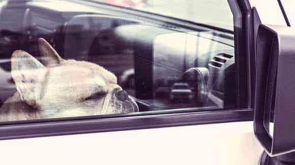 5 Steps to a Safe Drive with Your Dog