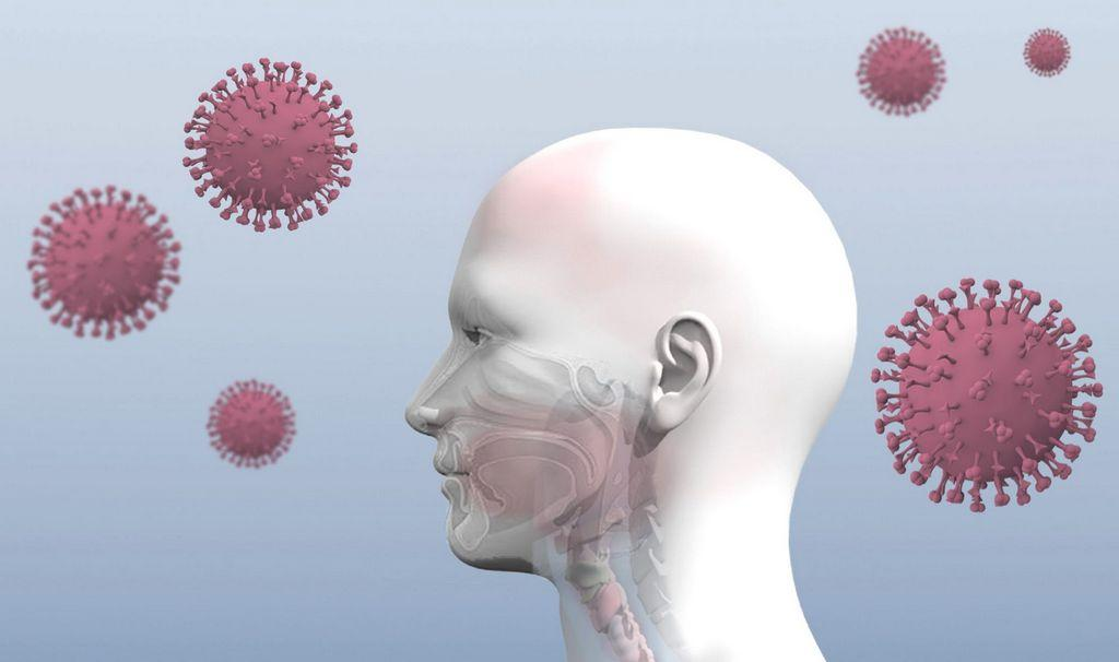 What does the coronavirus infection do inside your body?