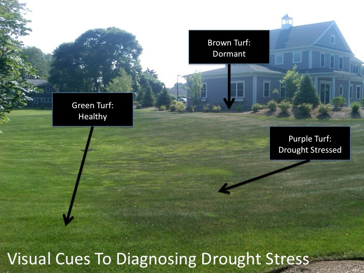 Tech Tip: Heat & Drought Stress - For Landscape & Lawn Care Pros