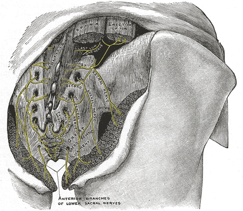Trapped Cluneal Nerves May Be Primary Reason for Low Back Pain - Massage And Fitness Magazine