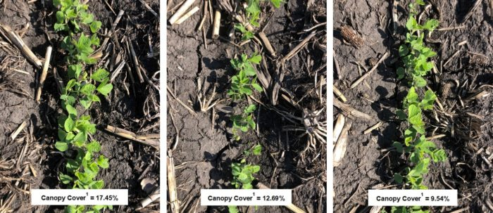 Three Things to Remember with Canopy Closure and Weed Control in 2021