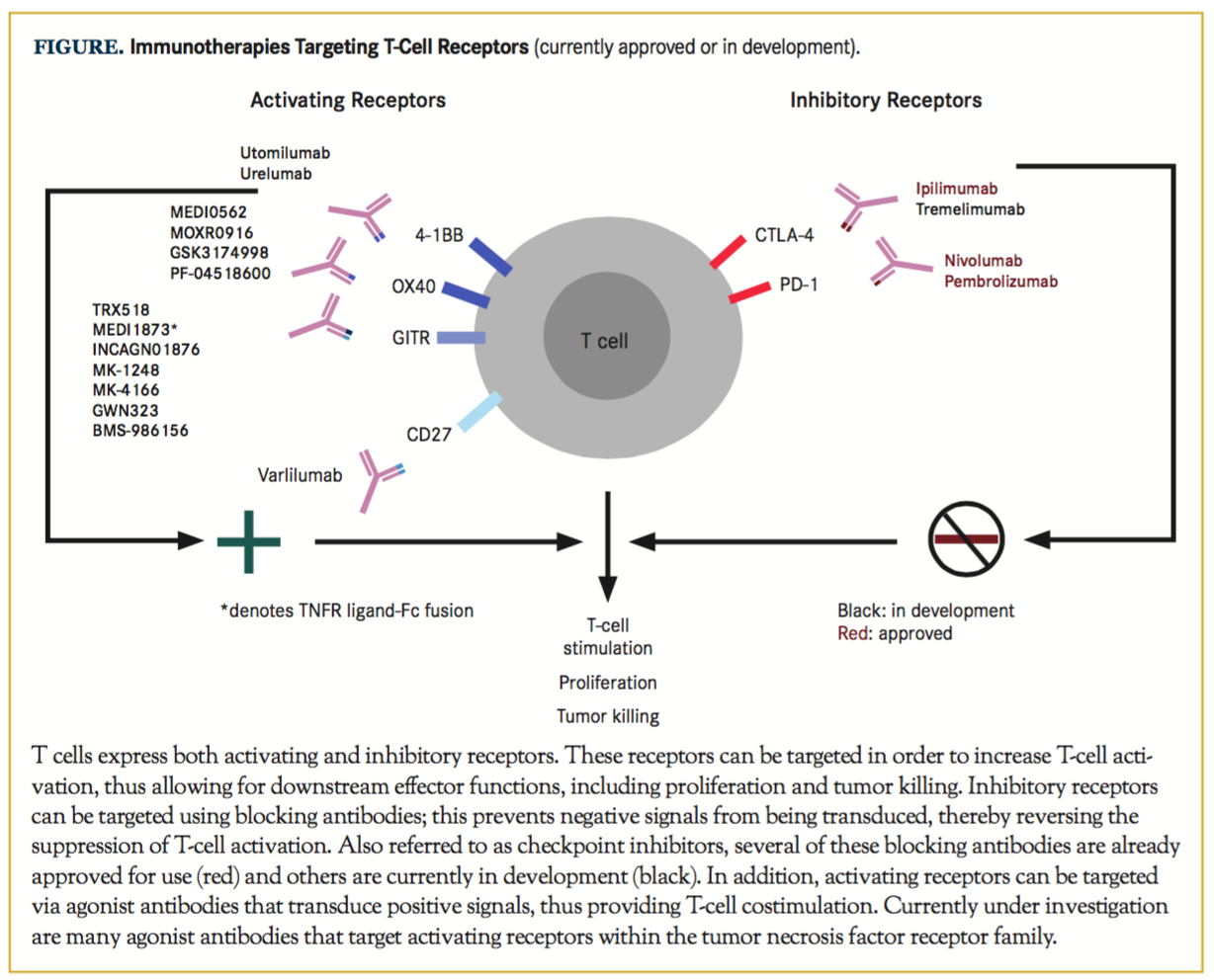 TNFR Agonists a Review of Current Biologics Targeting Ox40 4 1Bb