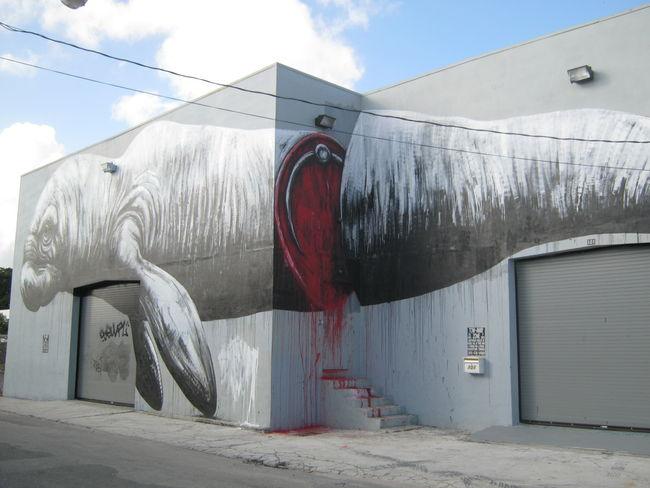 Street Art Par Roa - Miami (FL)