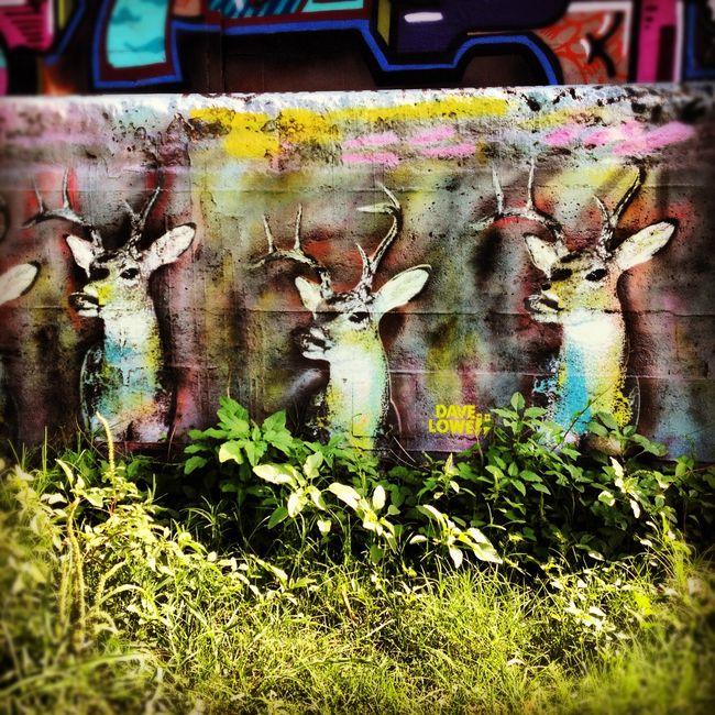 Street Art Par David Lowe - Austin (TX)