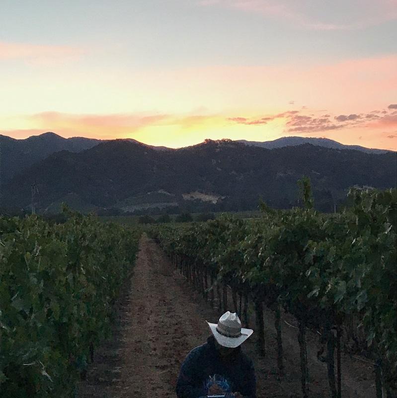 2017 Sassoferrato by Matt Smith Cannonau Slide Hill Vineyard Edna Valley