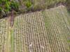 Sunorchbloom-20120428-131-134_thumb