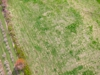 Sunorchbloom 20120428 131 178 thumb