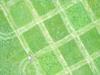 Leevis-20120523-175-33_thumb