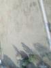 Img 0219 thumb
