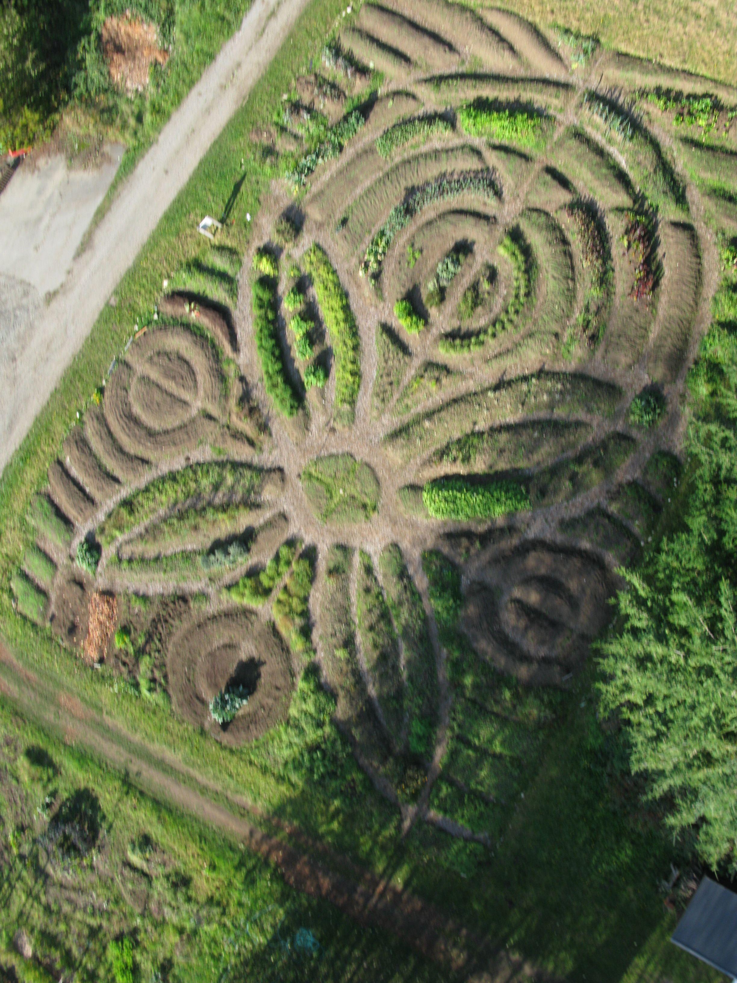 indigenous-health-garden-ubc-farm