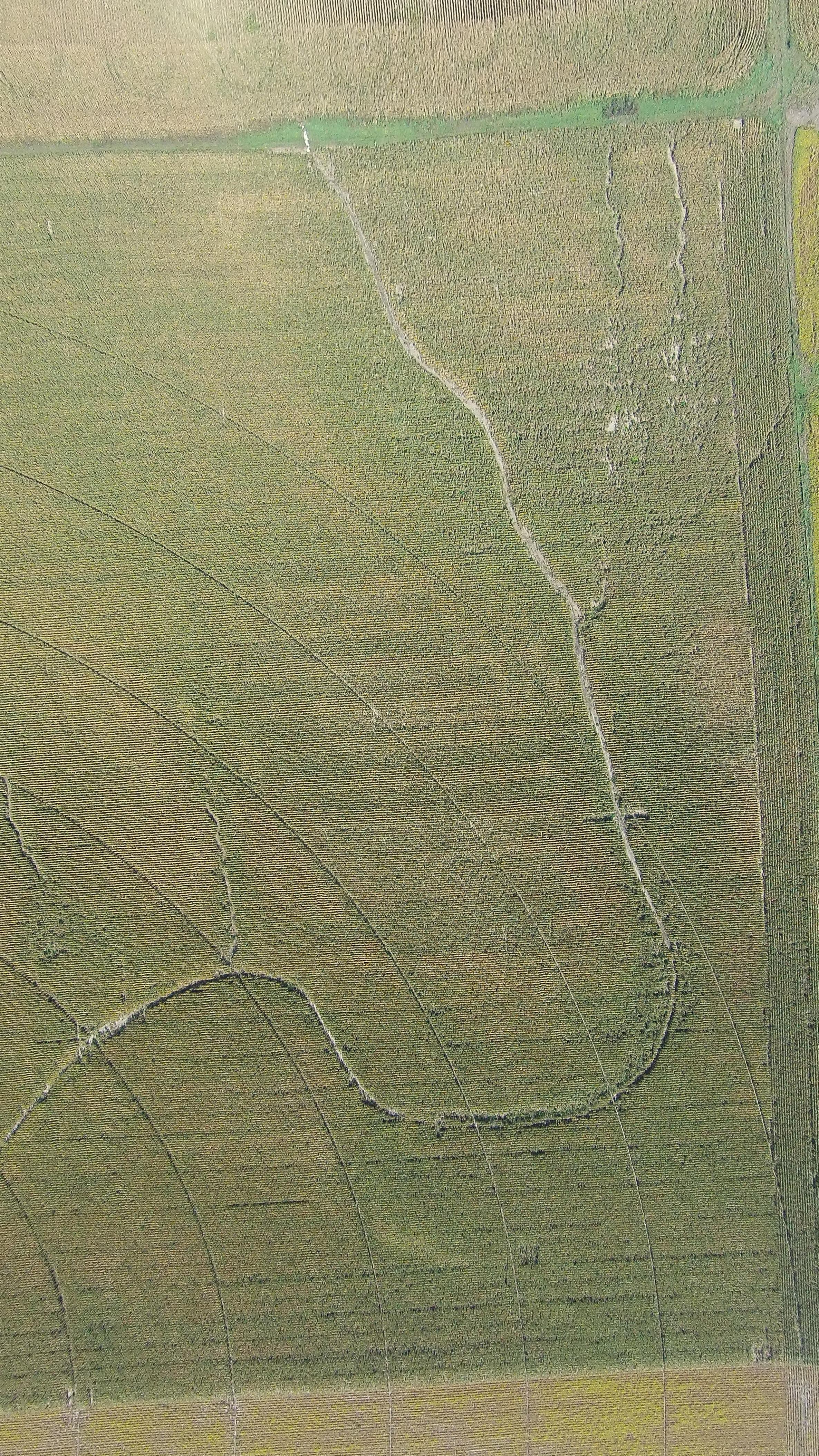 corn-field-3