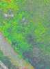 Img_4249_ndvi_color_thumb