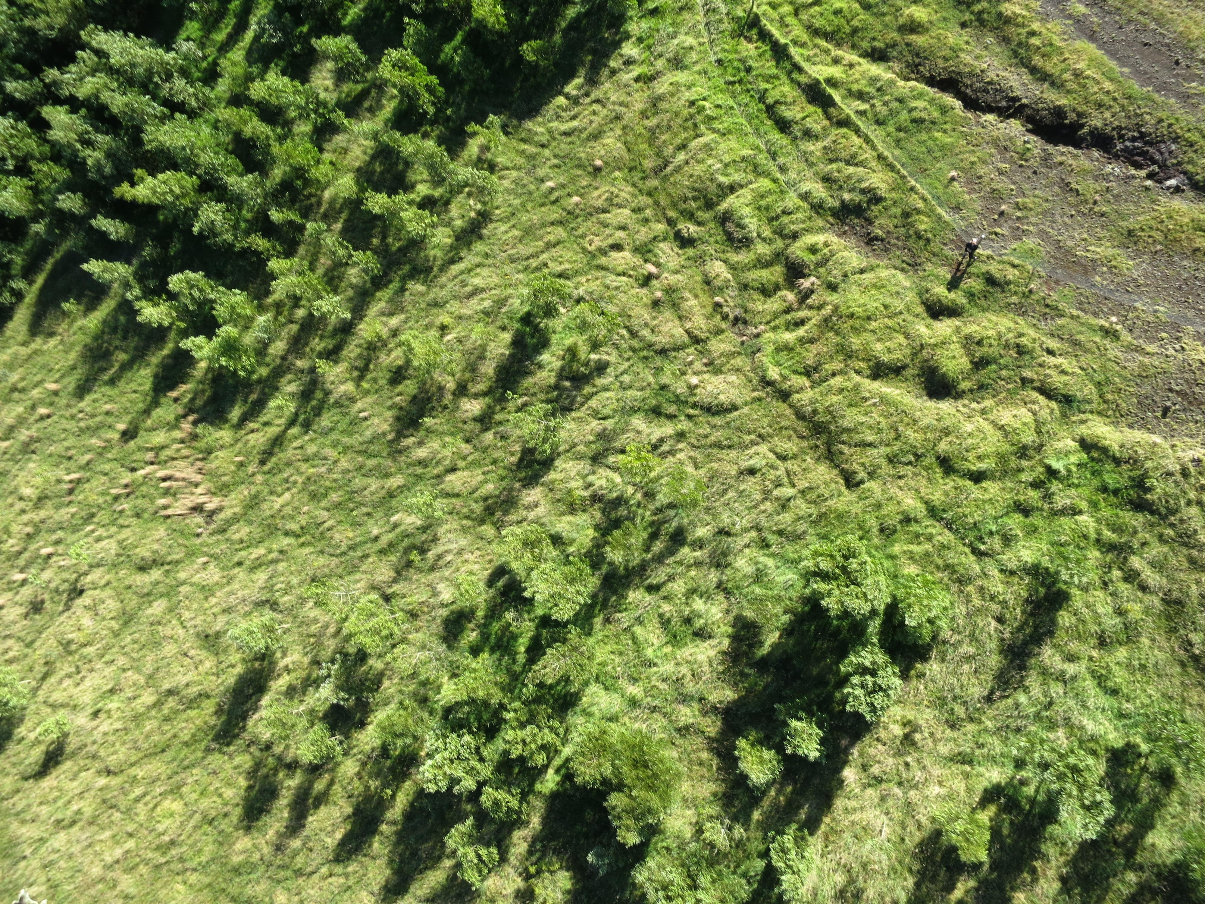 Hawaiian Legacy Forest
