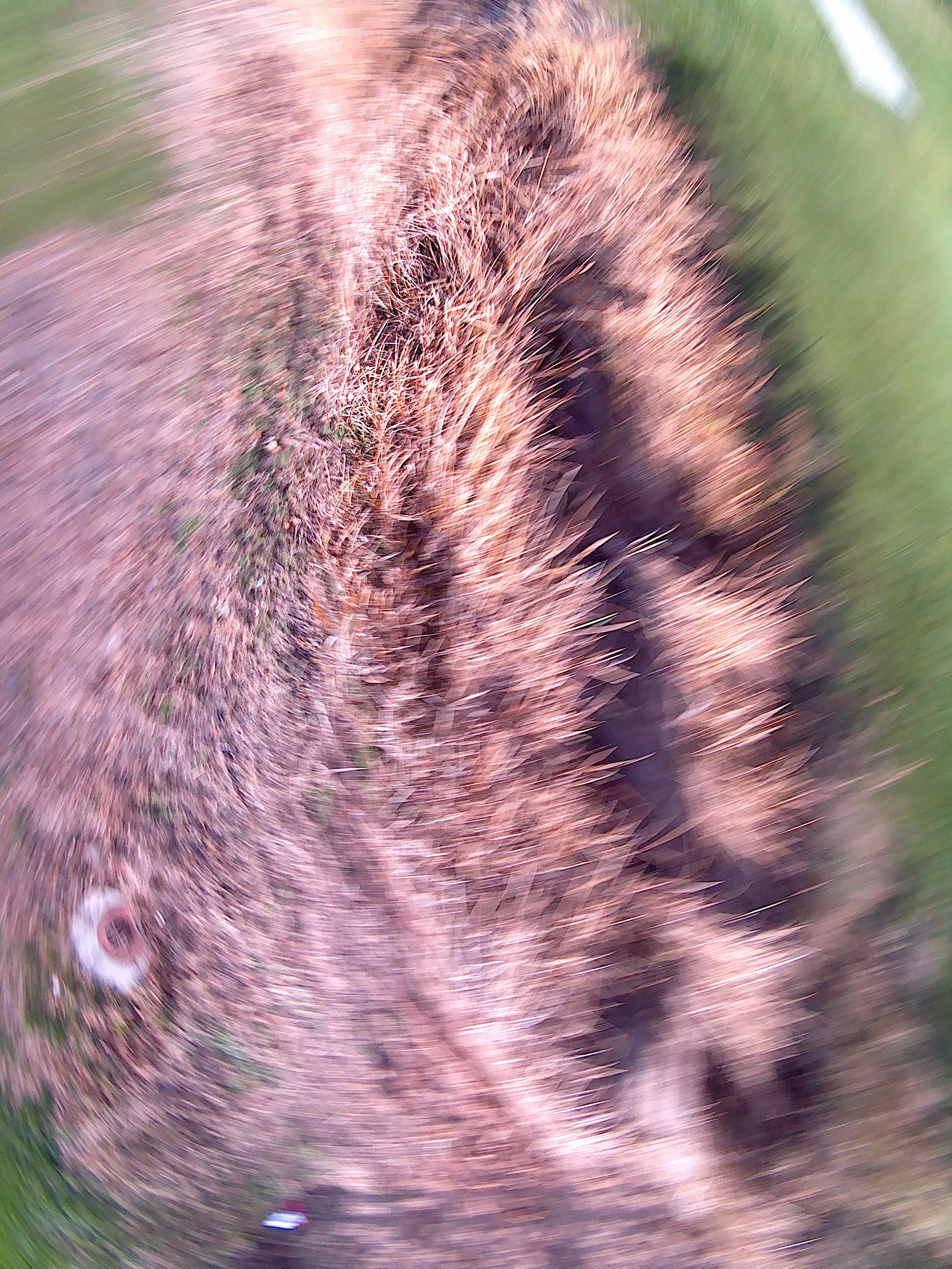 Copper Slough at Dodds Park