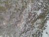 Dji 0166 thumb