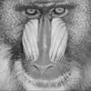 Baboon thumb