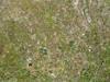 Eagleabove-20110625-5003_thumb