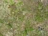 Eagleabove-20110625-4984_thumb