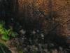 Ovpkap 20111028 85 38 thumb