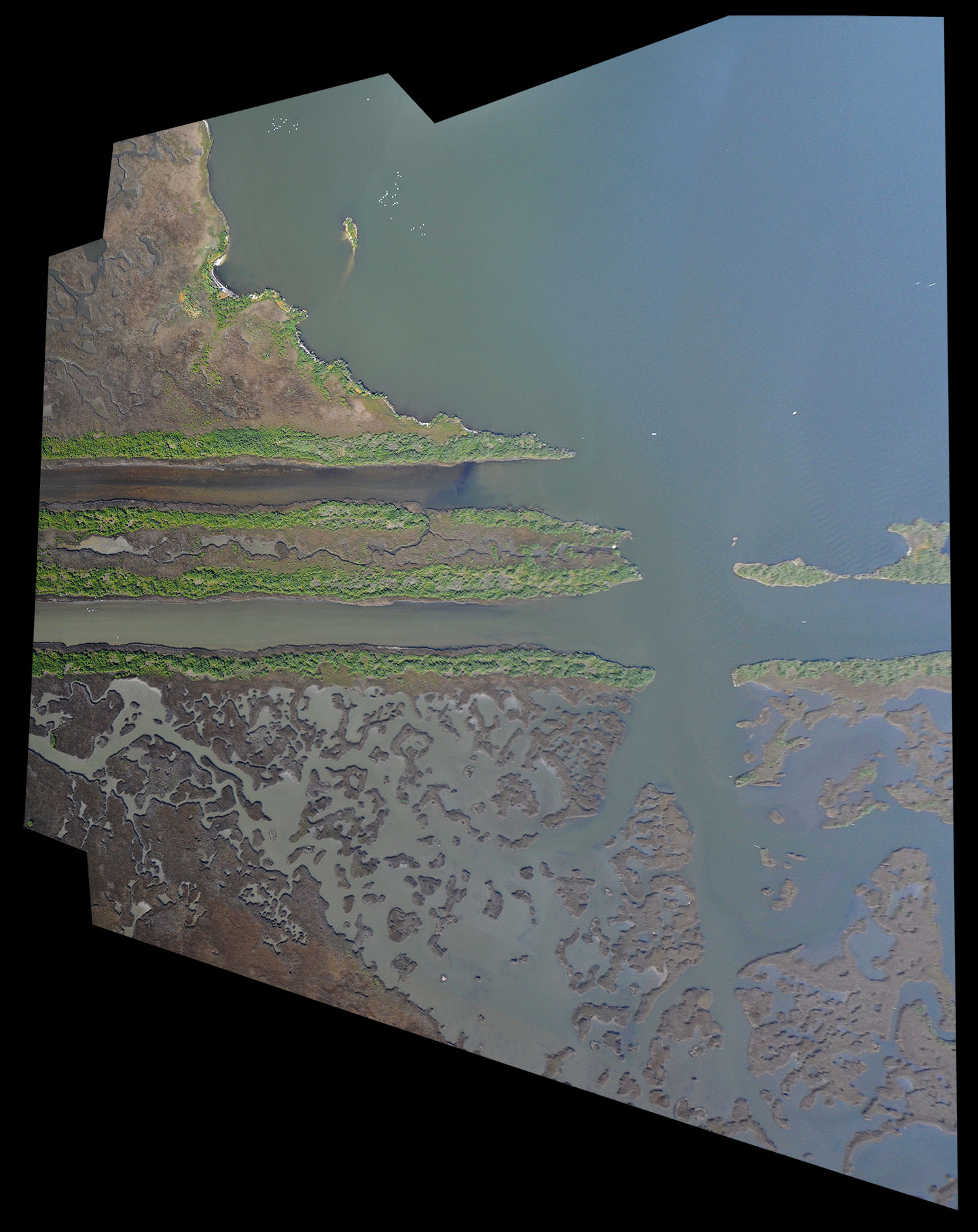 2011-2-25-louisiana-catbay