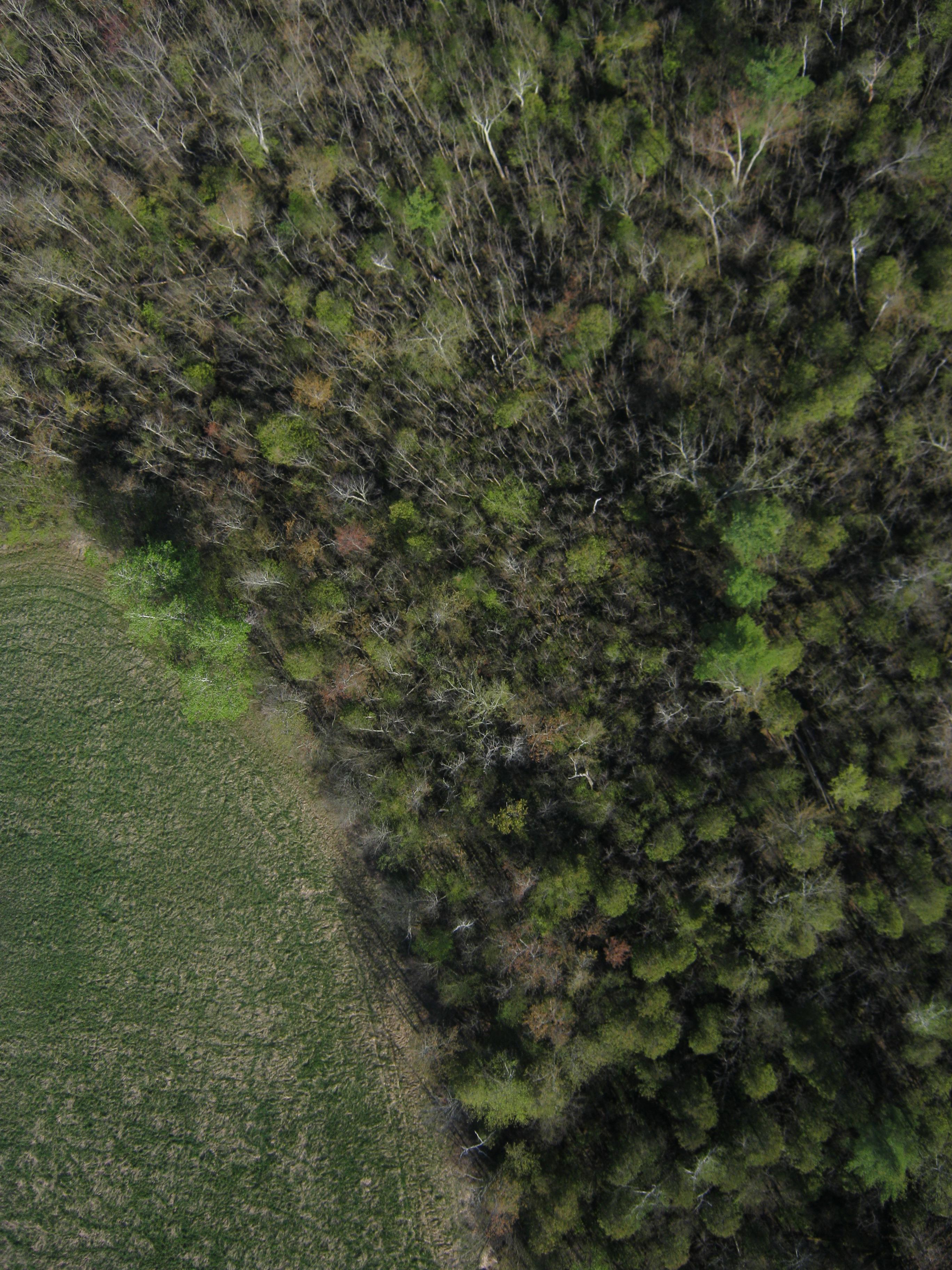 salisbury-swamp-n--