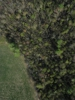 Swampvis-20120505-151-163_thumb