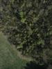 Swampvis-20120505-151-167_thumb