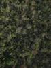 Swampvis-20120505-151-171_thumb