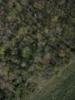Swampvis-20120505-151-261_thumb