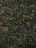 Swampvis-20120505-151-217_thumb