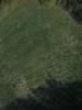 Swampvis-20120505-151-329_thumb