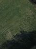 Swampvis-20120505-151-327_thumb