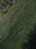 Swampvis-20120505-151-305_thumb