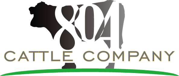 804 Cattle Company Logo