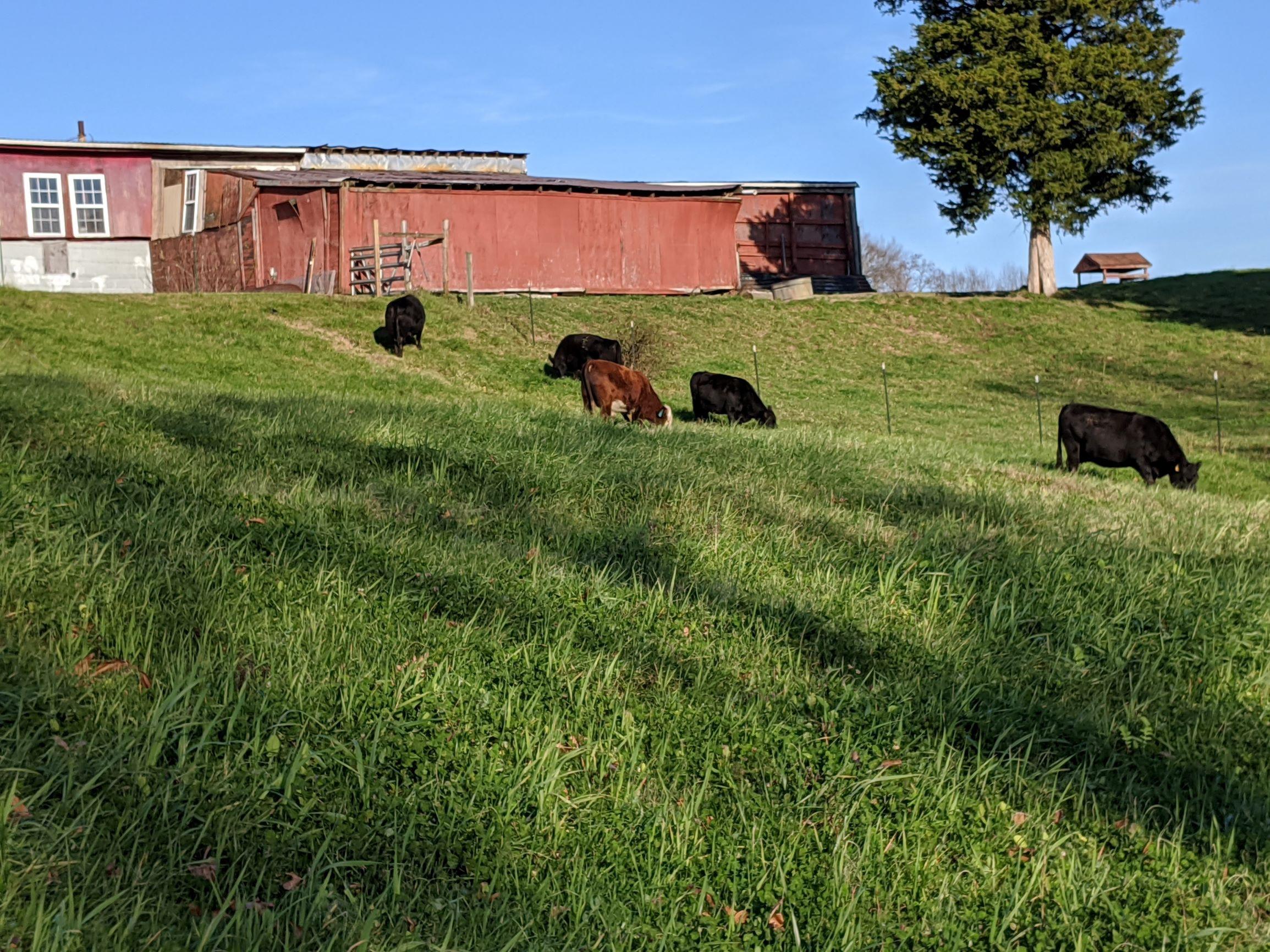 Enjoying grazing on the hill