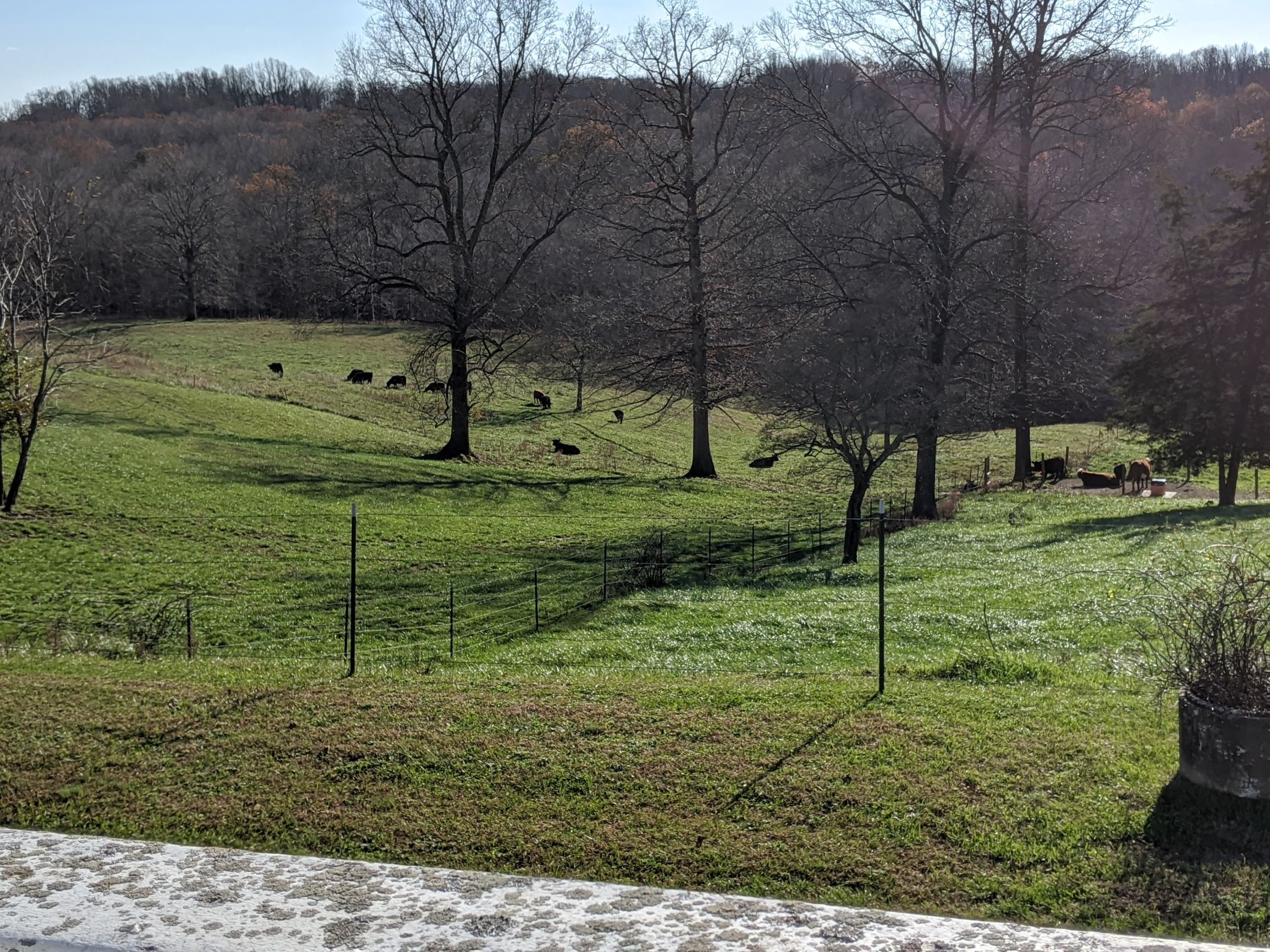 Looking out over the back pasture