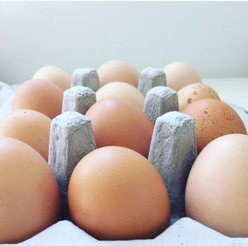 Elle's Eggs