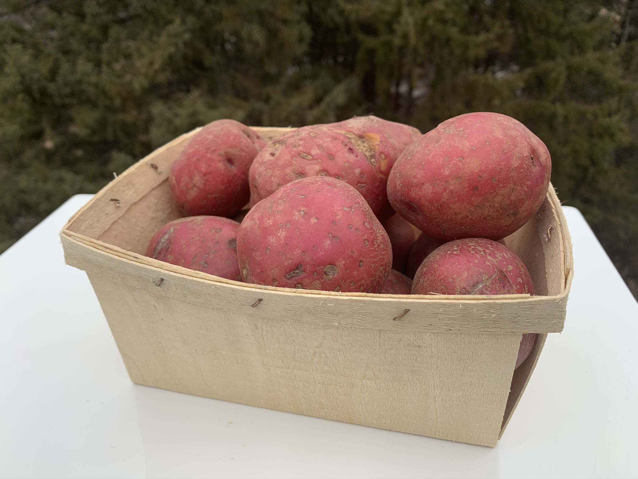 Norland Red Potato