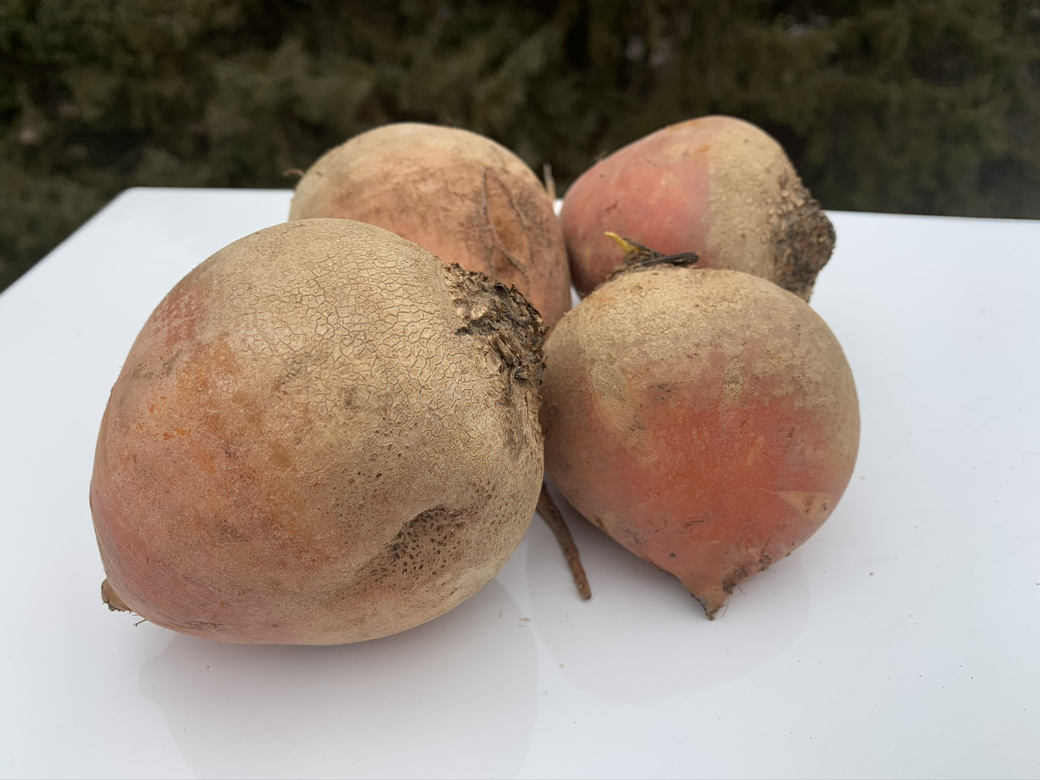 Gold Beets