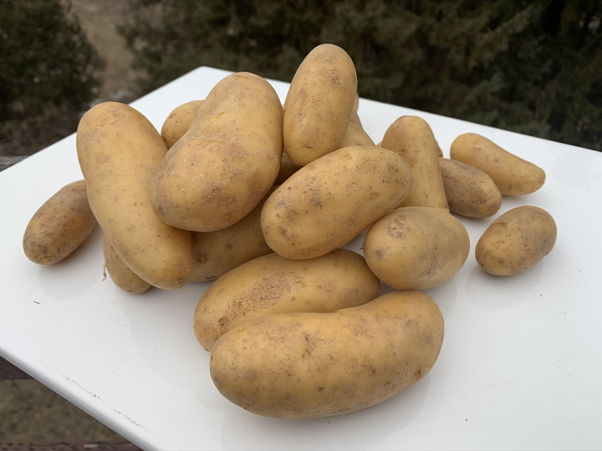Yellow Fingerling Potato