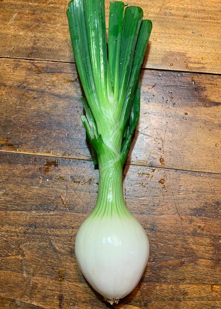 Knob Onions