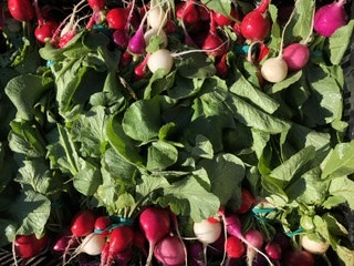 Colorful Radish Bunch