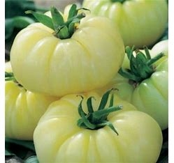 White Heirloom Tomato